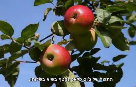 ג'וס פלאס- פירות וירקות ללא ריסוסים